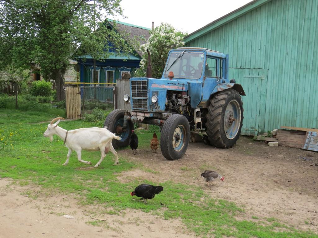 село Дивеево трактор и козы
